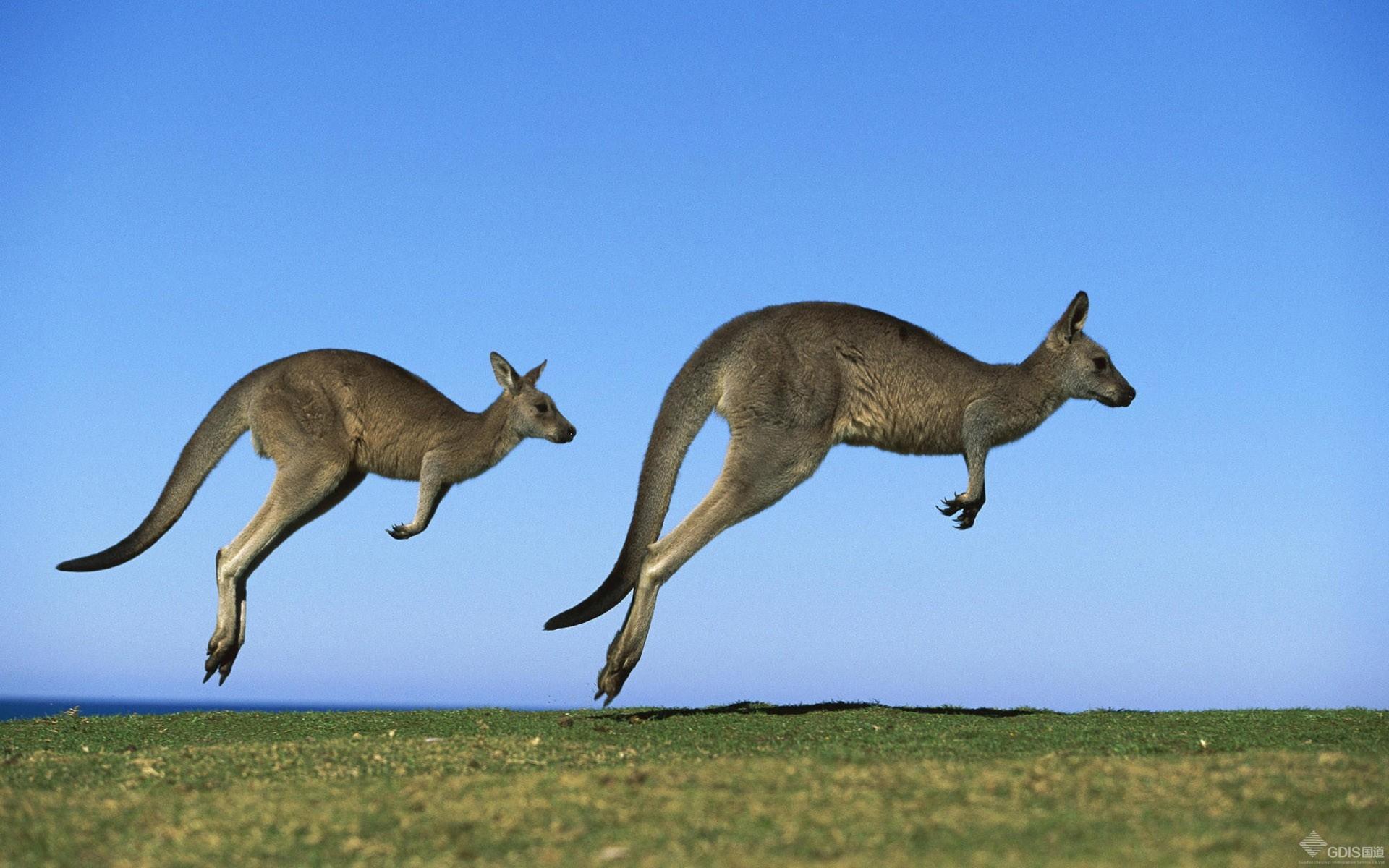 澳洲海淘官网哪个好?澳洲母婴类网站大全推荐
